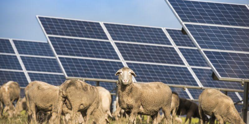 Fotowoltaika w gospodarstwie rolnym – czy to może się opłacać?